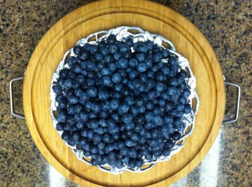 Blueberries treated Universal Calcium